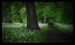 path3.jpg